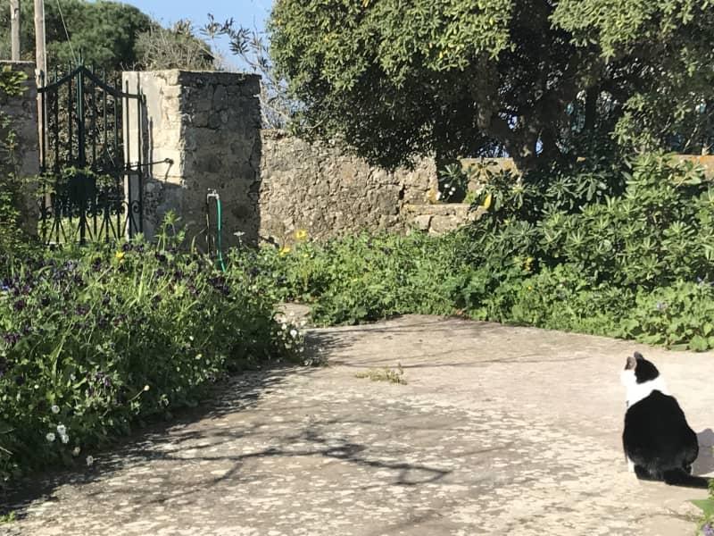 Housesitting assignment in Fiskardo, Greece