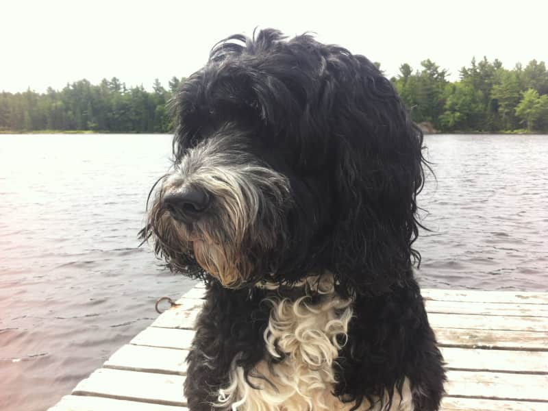 Housesitting assignment in Picton, Ontario, Canada