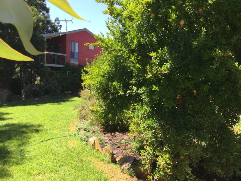 Housesitting assignment in Willunga, South Australia, Australia