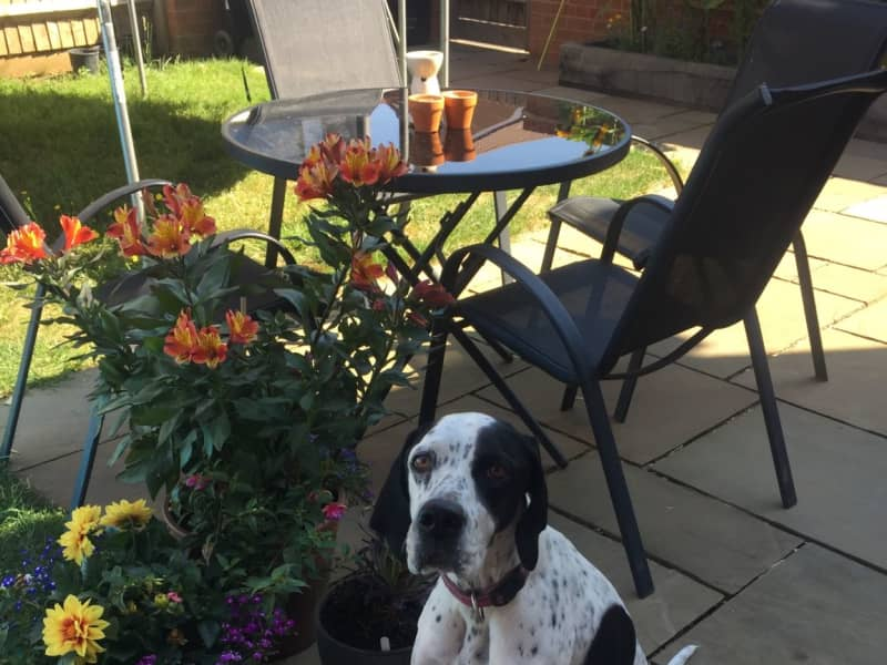 Housesitting assignment in Trowbridge, United Kingdom