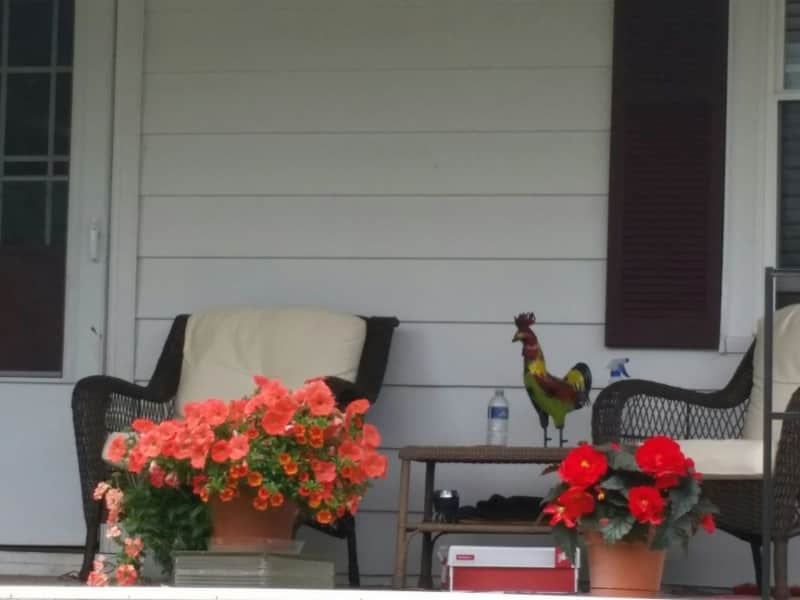 Housesitting assignment in Harveys Lake, Pennsylvania, United States