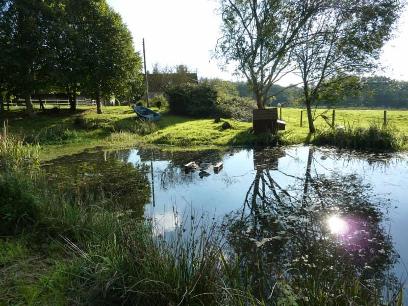 Housesitting assignment in Fordingbridge, United Kingdom