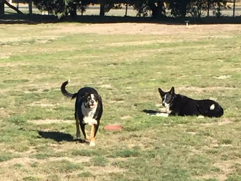Housesitting assignment in Ballan, Victoria, Australia