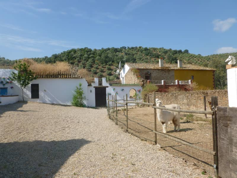 Housesitting assignment in Montoro, Spain