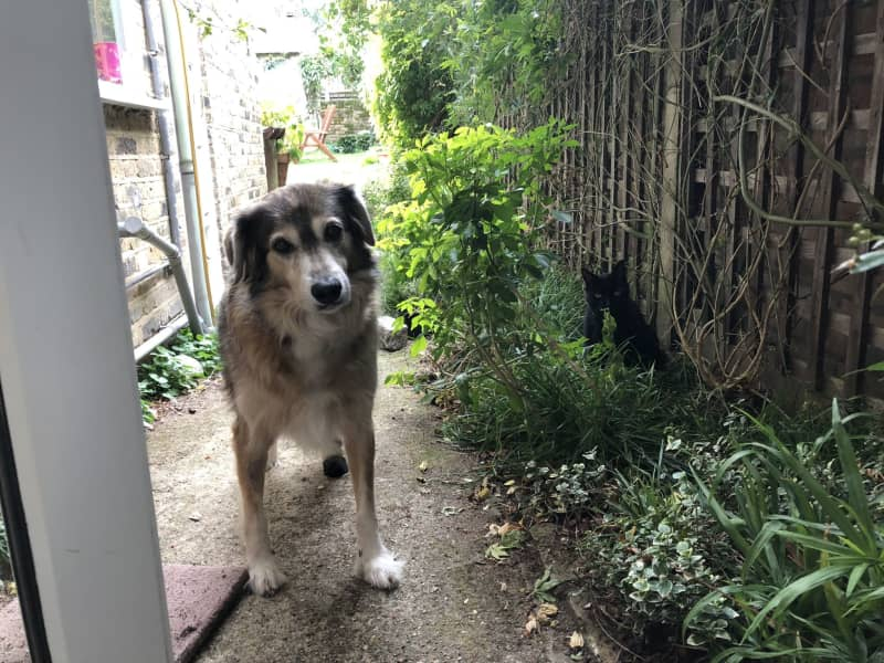 Housesitting assignment in Lower Clapton, United Kingdom