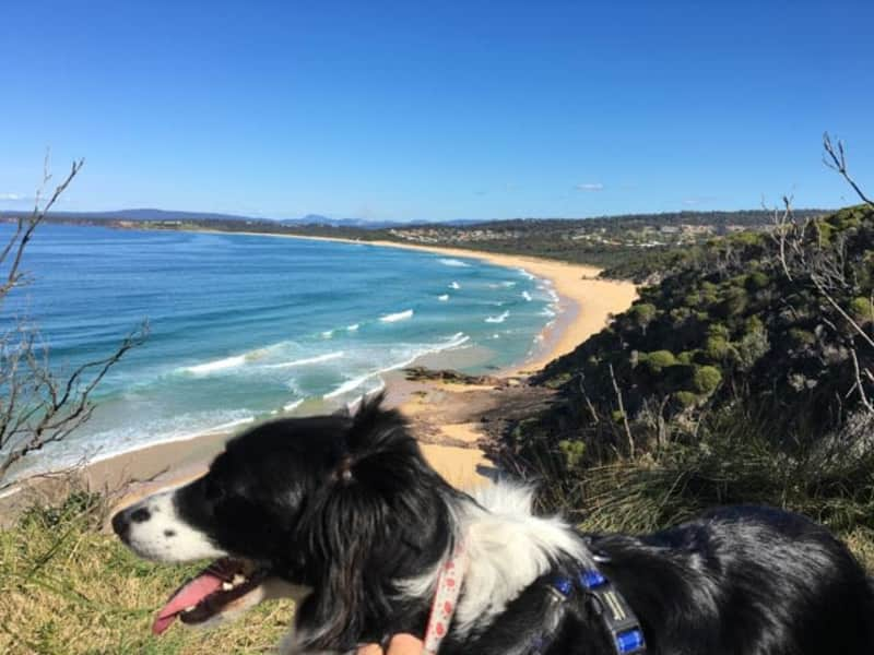 Housesitting assignment in Tura Beach, New South Wales, Australia