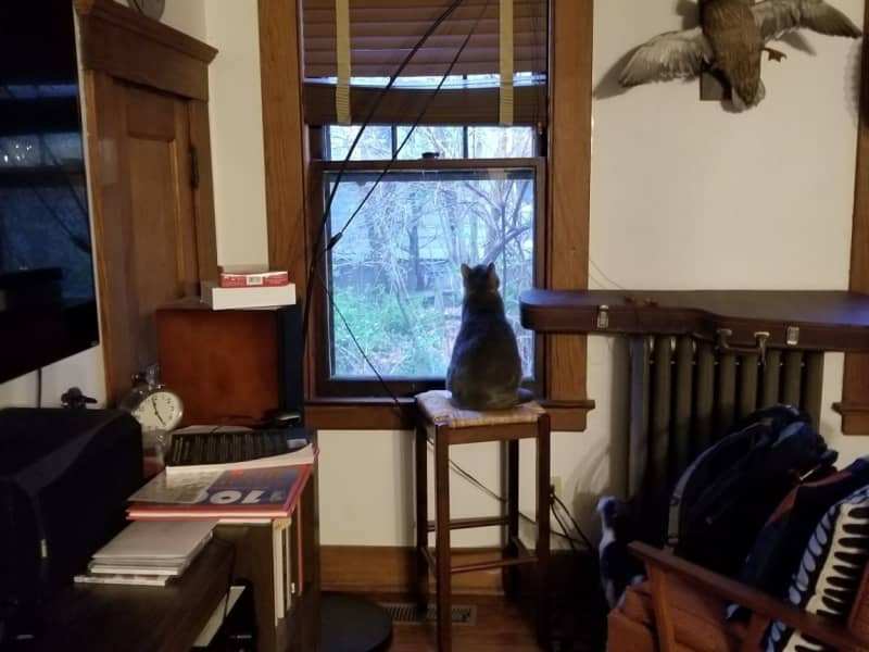 Housesitting assignment in New Haven, Connecticut, United States