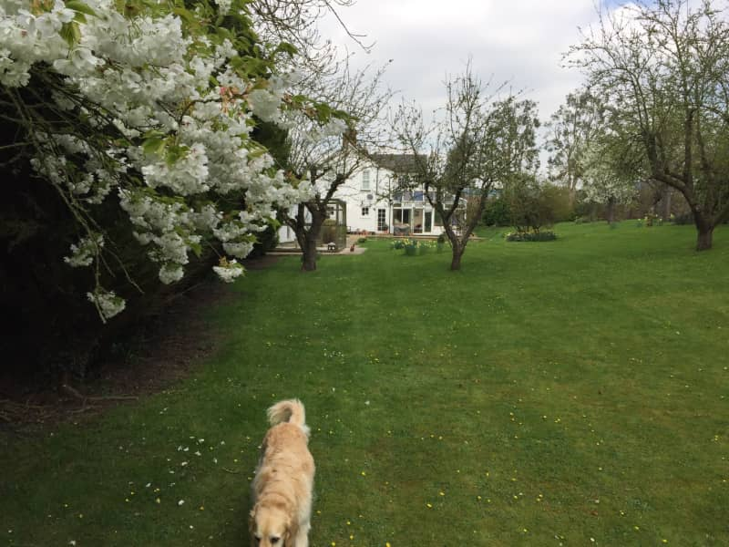 Housesitting assignment in Hardwick, United Kingdom