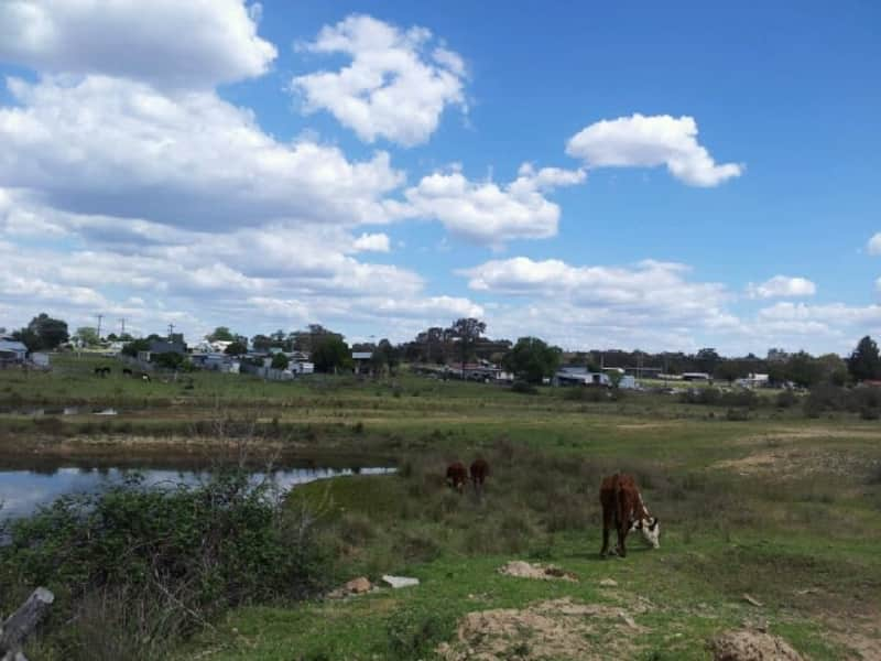 Housesitting assignment in Tingha, New South Wales, Australia