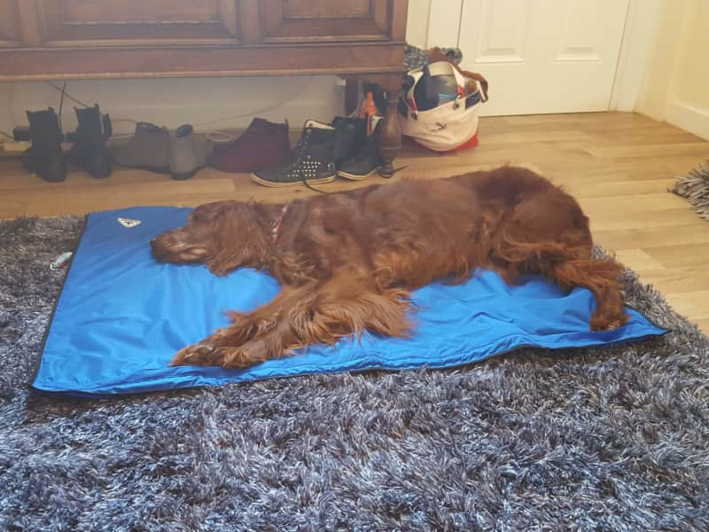 Housesitting assignment in Sneinton, United Kingdom