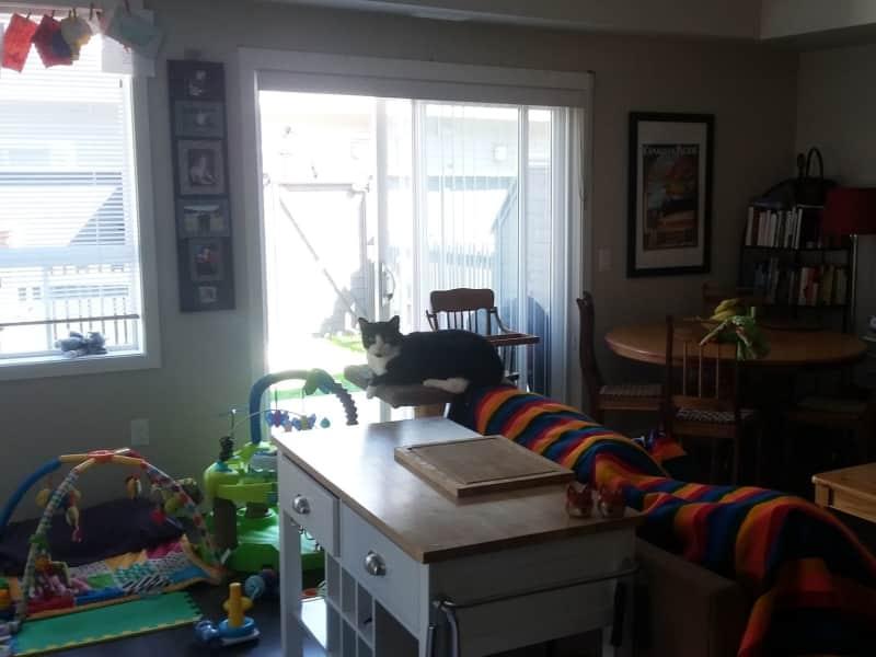 Housesitting assignment in Kelowna, British Columbia, Canada