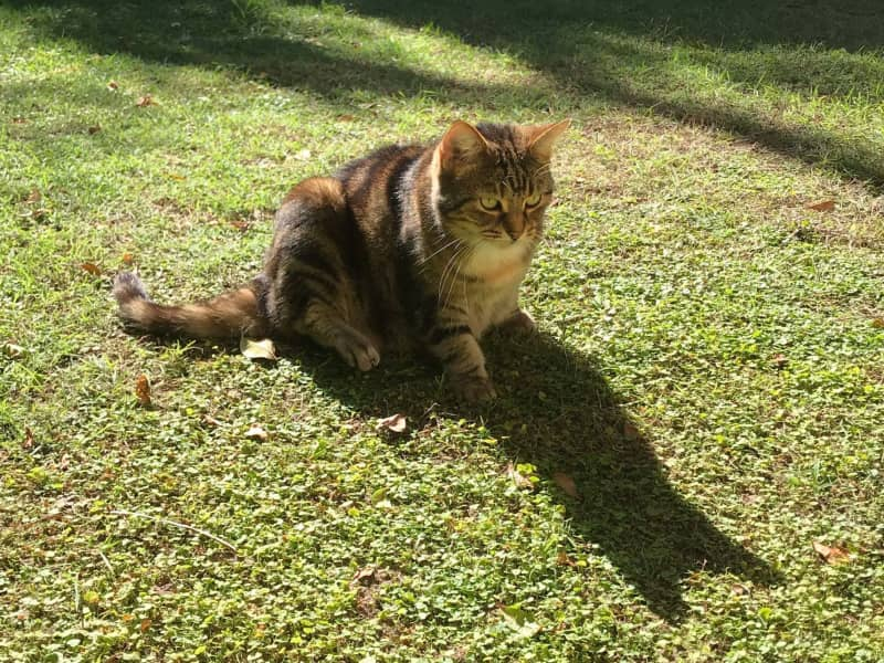 Housesitting assignment in South Brisbane, Queensland, Australia