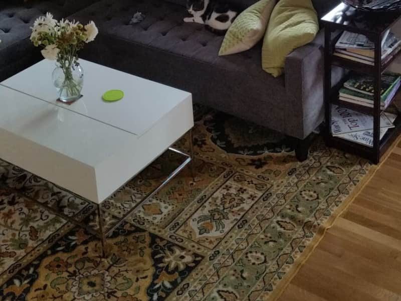 Housesitting assignment in Eckington, Washington, D.C., United States