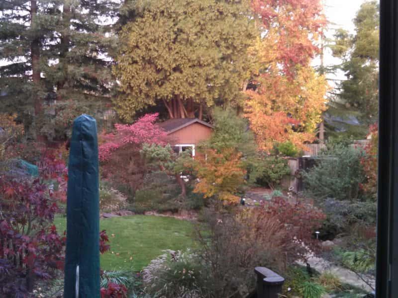 Housesitting assignment in Sebastopol, California, United States