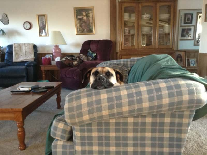 Housesitting assignment in Bickleton, Washington, United States