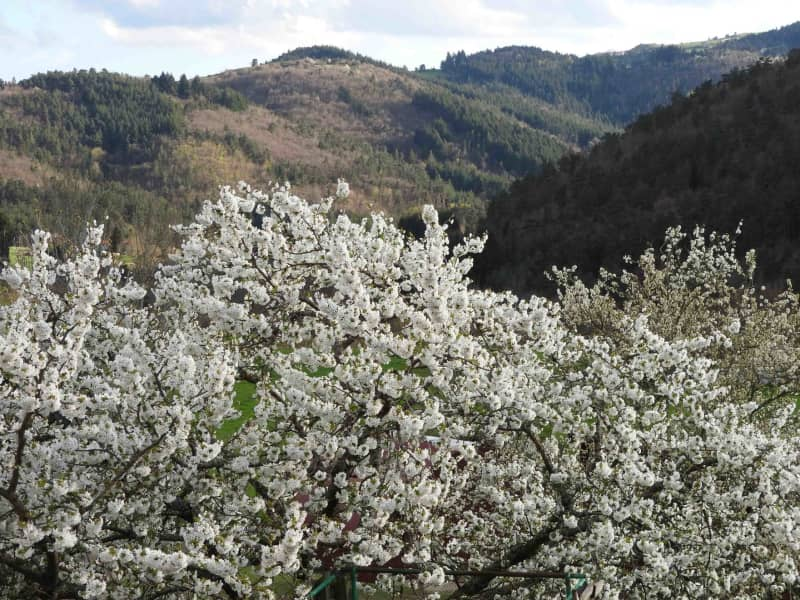 Housesitting assignment in Le Puy-en-Velay, France