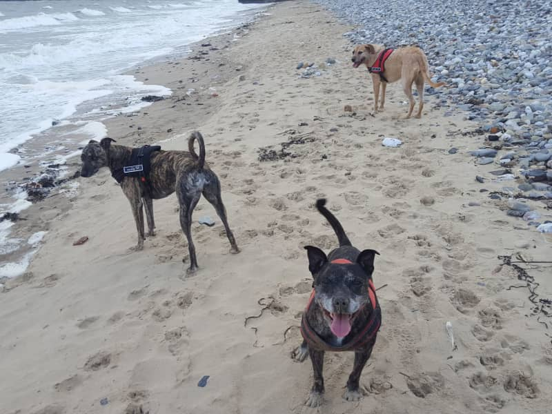 Housesitting assignment in Saundersfoot, United Kingdom