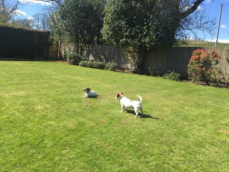 Housesitting assignment in Kirkintilloch, United Kingdom