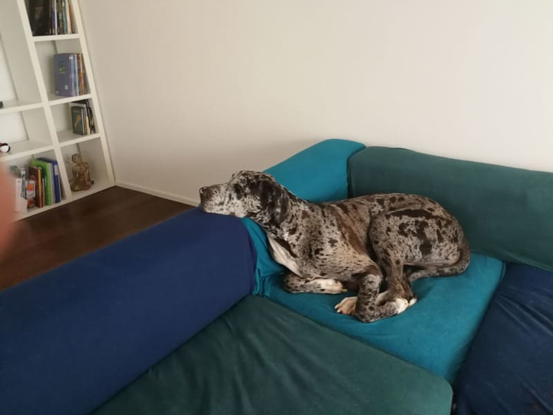 Housesitting assignment in Zollikerberg, Switzerland