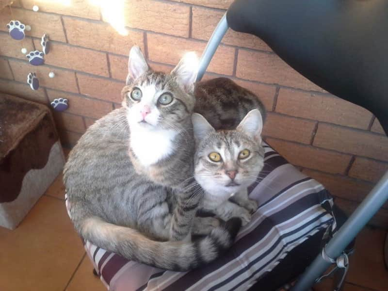 Housesitting assignment in Wiley Park, New South Wales, Australia