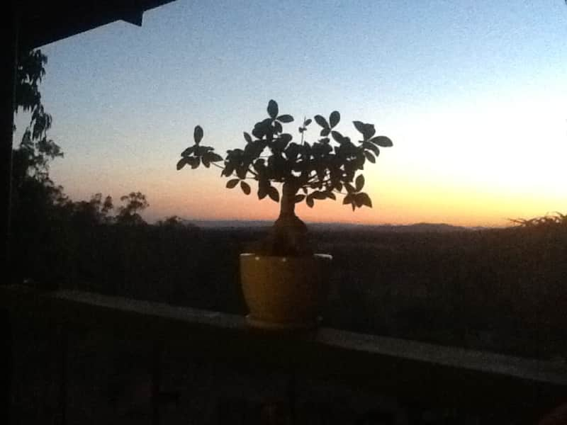 Housesitting assignment in West Stowe, Queensland, Australia