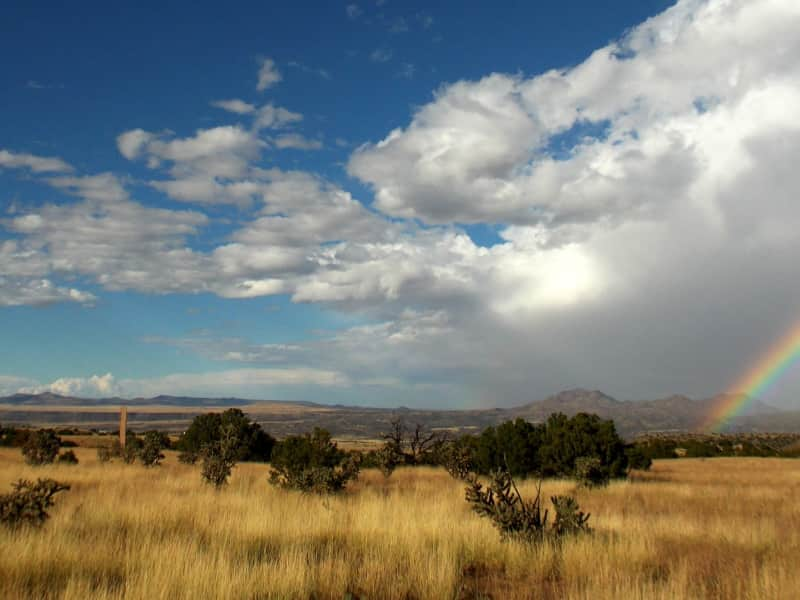 Housesitting assignment in Los Cerrillos, New Mexico, United States