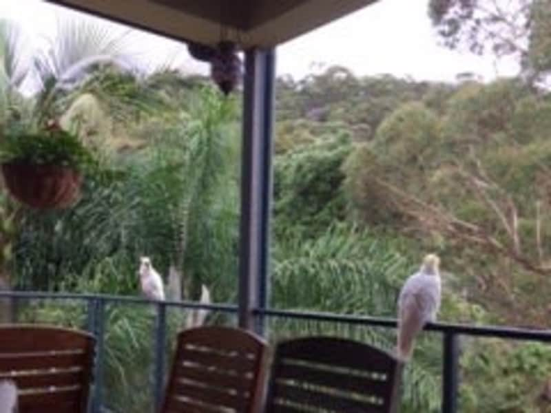 Housesitting assignment in Woy Woy Bay, New South Wales, Australia