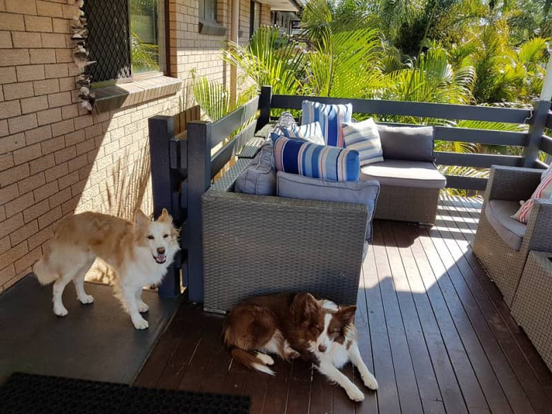 Housesitting assignment in Kallangur, Queensland, Australia