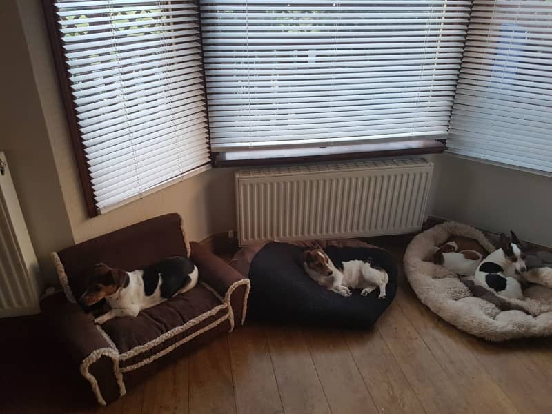 Housesitting assignment in Bewdley, United Kingdom