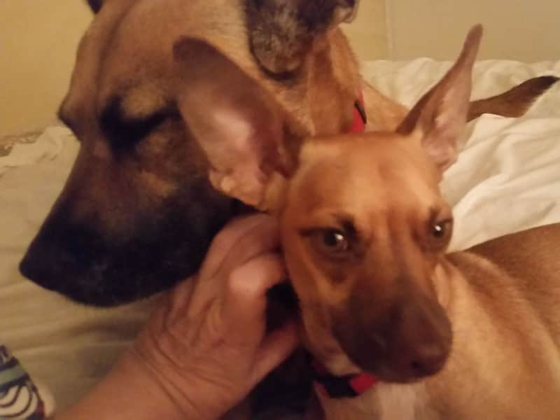 Housesitting assignment in Baytown, Texas, United States