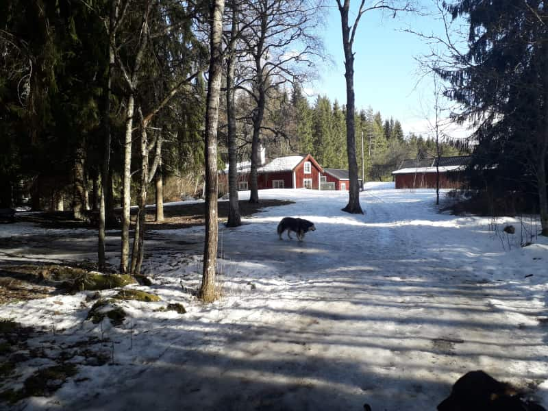 Housesitting assignment in Heby, Sweden