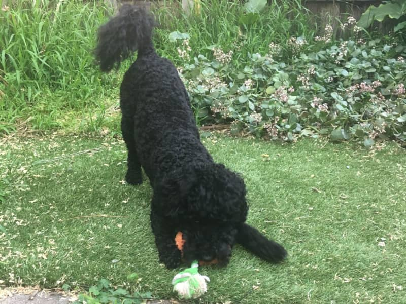 Housesitting assignment in Glen Huntly, Victoria, Australia