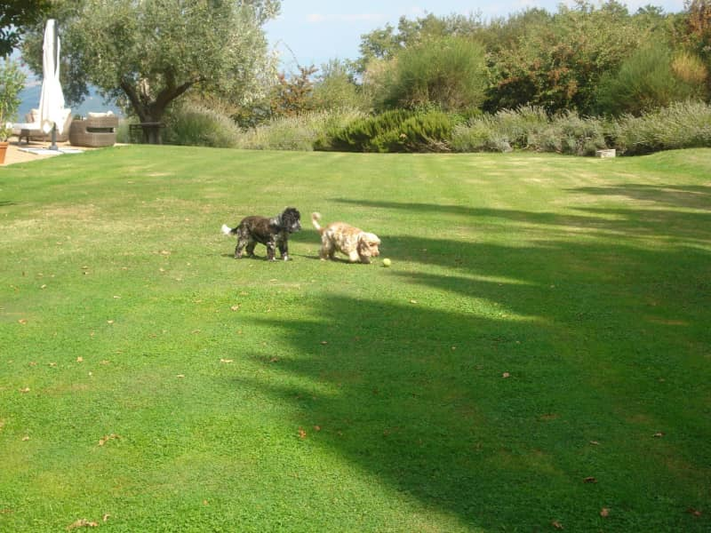 Housesitting assignment in Cetona, Italy