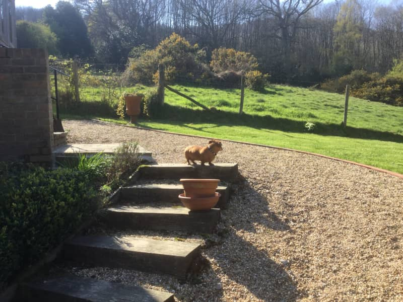 Housesitting assignment in Lurgashall, United Kingdom
