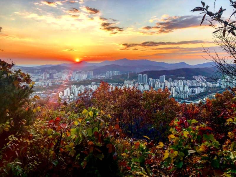 Housesitting assignment in Seongnam-si, South Korea