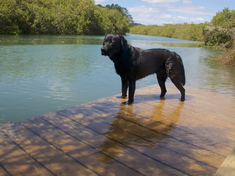 Housesitting assignment in Whangarei, New Zealand