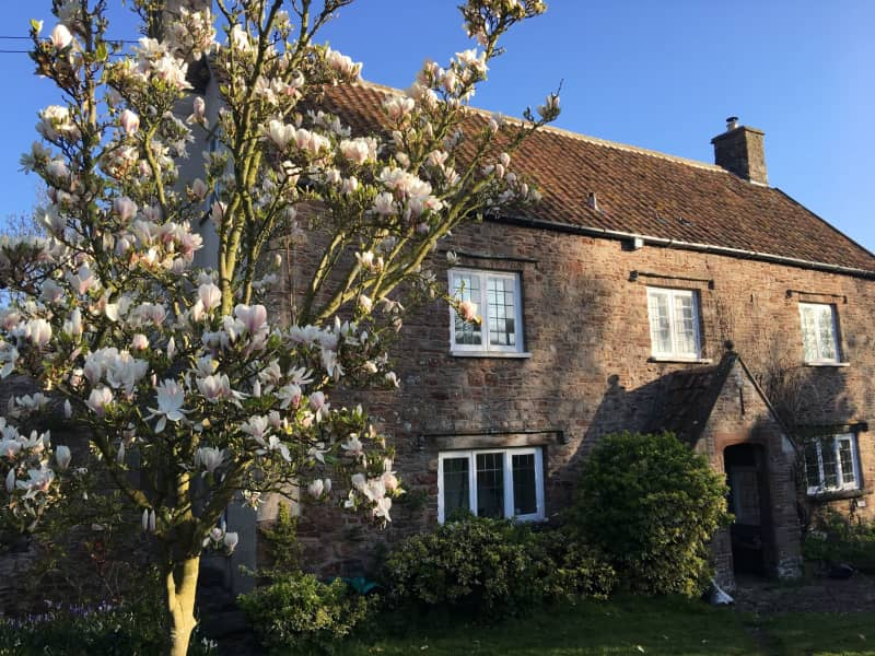 Housesitting assignment in Clapton in Gordano, United Kingdom