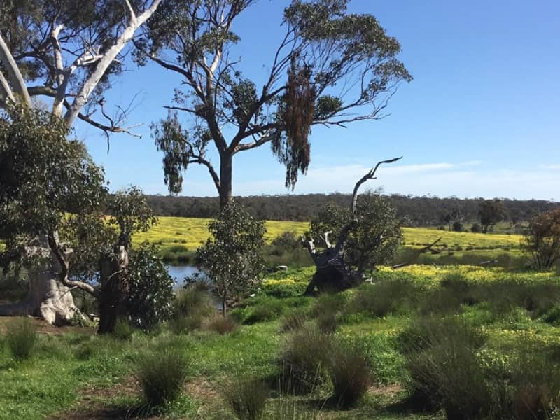 Housesitting assignment in Strathlea, Victoria, Australia