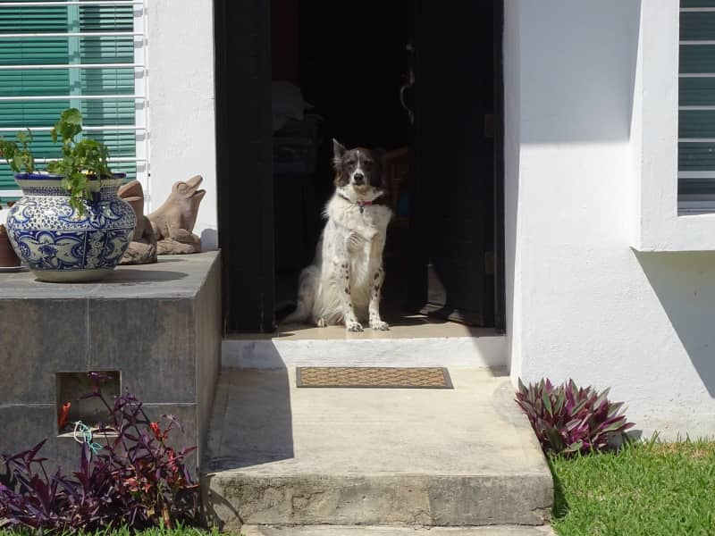Housesitting assignment in Caucel, Mexico