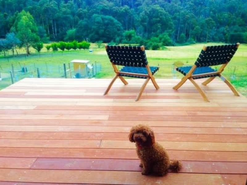 Housesitting assignment in Ranelagh, Tasmania, Australia