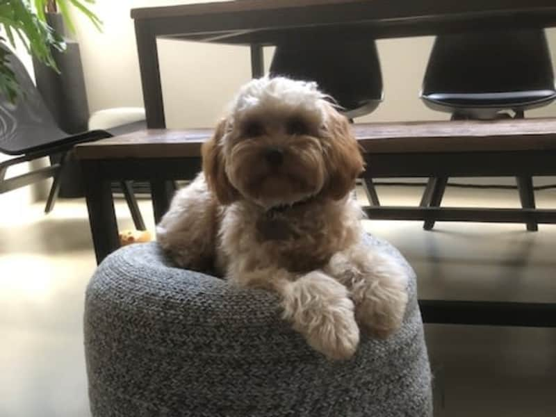 Housesitting assignment in Surry Hills, New South Wales, Australia