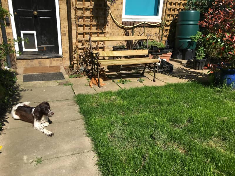Housesitting assignment in Langley Marish, United Kingdom