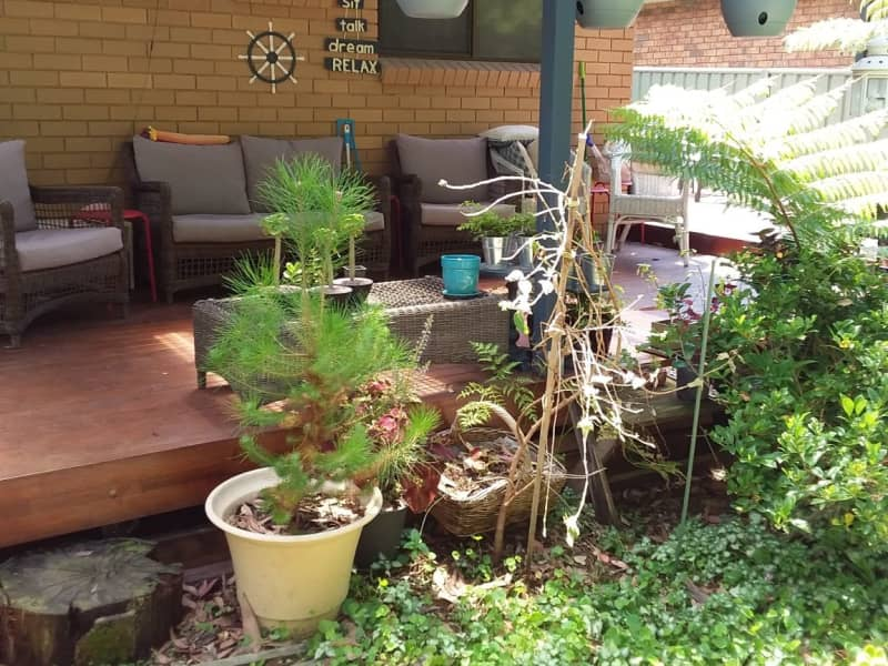 Housesitting assignment in Batemans Bay, New South Wales, Australia