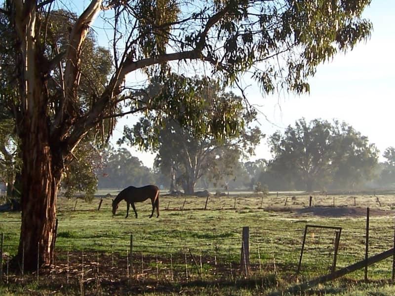 Donna from Bonbeach, Victoria, Australia