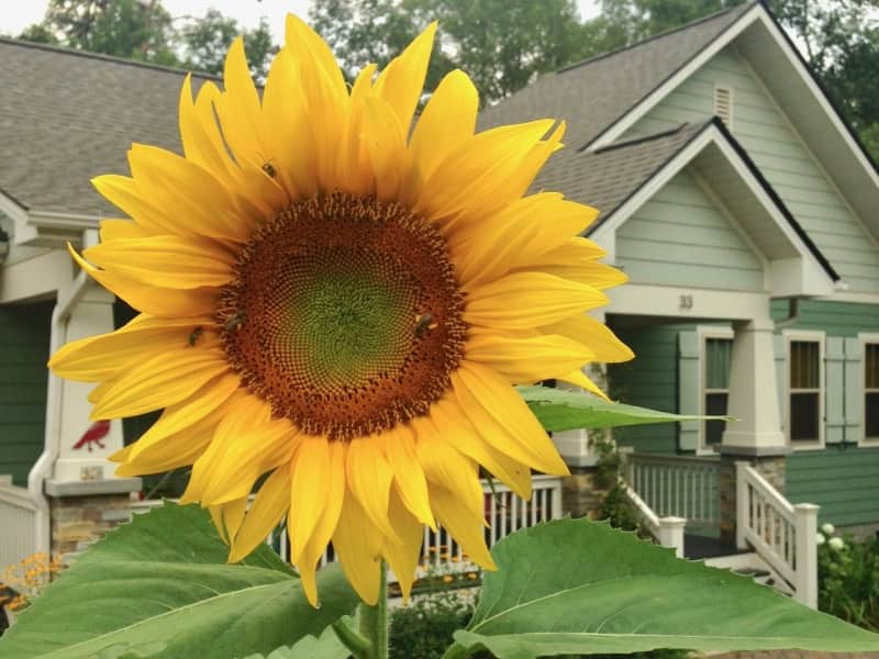Housesitting assignment in Candler, North Carolina, United States