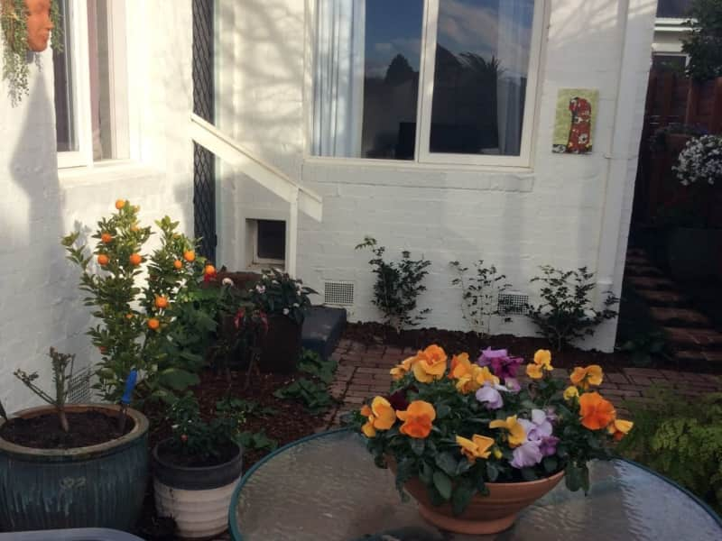 Housesitting assignment in Beaumaris, Victoria, Australia