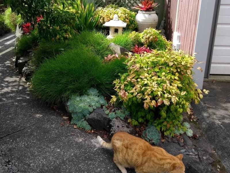 Housesitting assignment in Pakuranga Heights, New Zealand