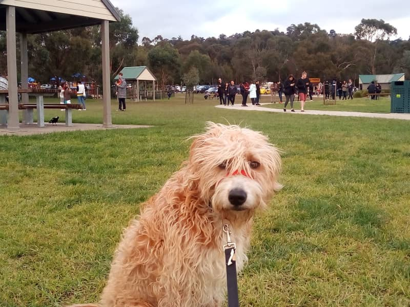 Housesitting assignment in Montrose, Victoria, Australia