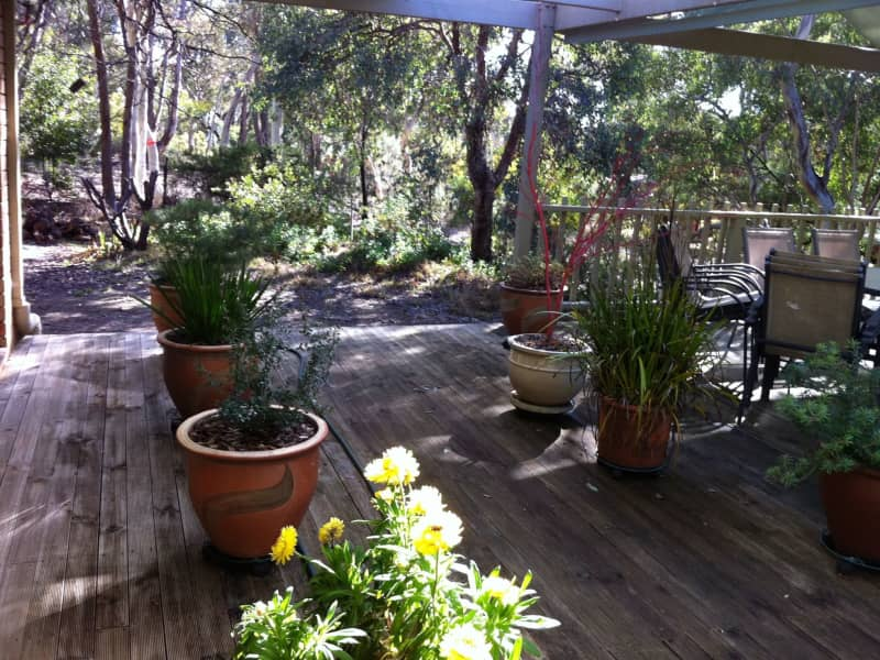 Housesitting assignment in Queanbeyan, New South Wales, Australia