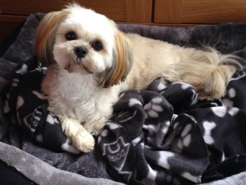 Housesitting assignment in Cambuslang, United Kingdom